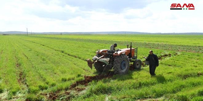 Comienza siembra de algodón y hortalizas de verano en Alepo