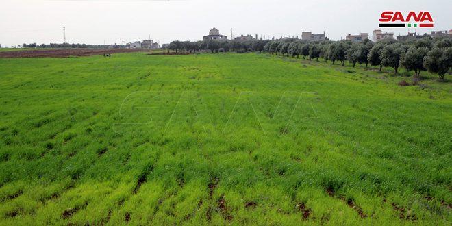 بزيادة 3 آلاف هكتار لمحصول القمح… زراعة الحسكة تضع الخطة الزراعية للموسم الشتوي القادم