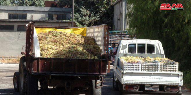 تحويل مبلغ 300 مليون ليرة لصرف أثمان العنب العصيري بالسويداء